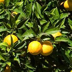 aziende alimentari e succhi di frutta